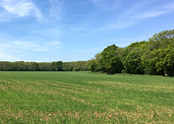 Land for Sale Guildford
